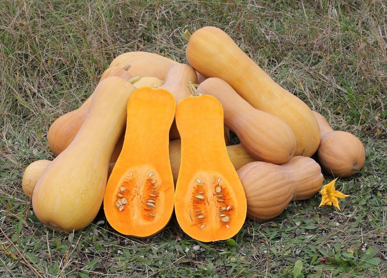 Dynia – pomarańczowe zdrowie!