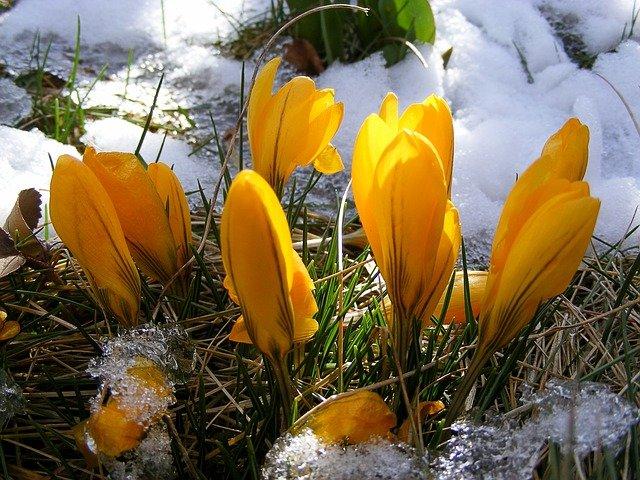 Dieta, która wspomoże Twój zmęczony zimą organizm – dieta na tzw. przesilenie wiosenne.