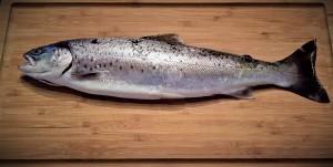 Ryby naświęta