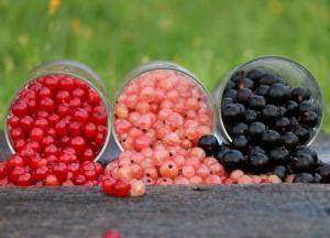 Sezonowe owoce iwarzywa